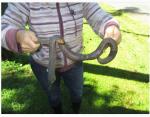Una lombriz gigante aparecida en Australia causa estupor en las redes