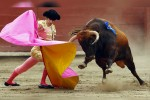Consulta sobre corridas de toros costarían 110 mdp